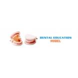 dental education model|dental models for patient education|dental patient education models